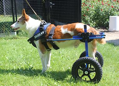 rolstoel 2