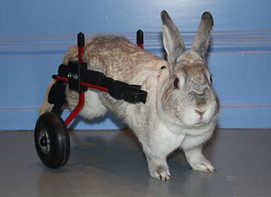 rolstoel 3