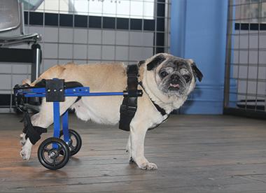 rolstoel 4