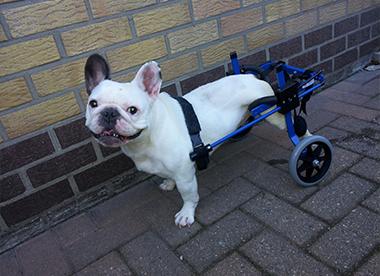 rolstoel 5
